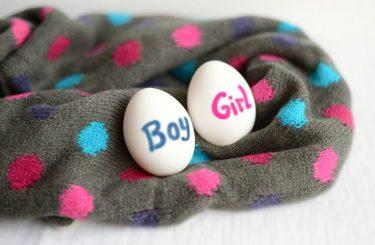 分割胚移植と胚盤胞移植、妊娠しやすいのはどちらでしょうか?