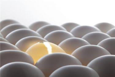 卵胞について