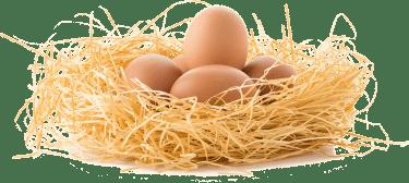 着床できるかは卵で決まる?