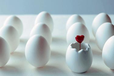 初期胚と胚盤胞